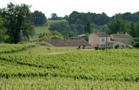 wijngaarden bij vakantiehuizen Le Guinot