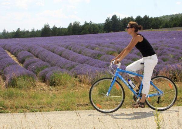 0-lavendel-Mooiste-fietsroutes-van-de-Vaucluse-in-Frankrijk