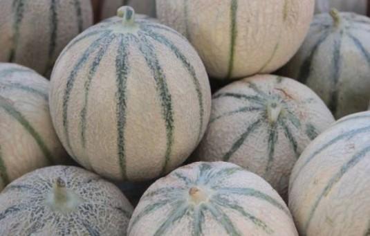1-Melon-Cavaillon-Vaucluse