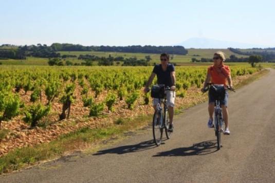 Wijngaarden-Mooiste-fietsroutes-van-de-Vaucluse-in-Frankrijk