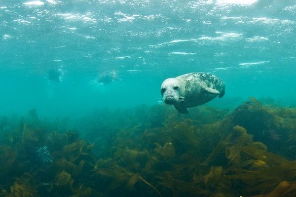 Zwemmen met zeehonden