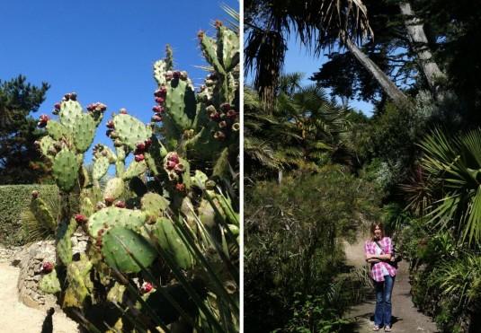 3-Botanische-tuin-jardin-georges-delaselle-op-ile-de-batz-cactussen