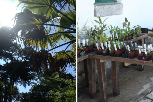 7-Botanische-tuin-jardin-georges-delaselle-op-ile-de-batz-bretagne