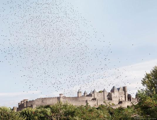 Maia-Flore_VU_AtoutFrance_21_Carcassonne_Aude
