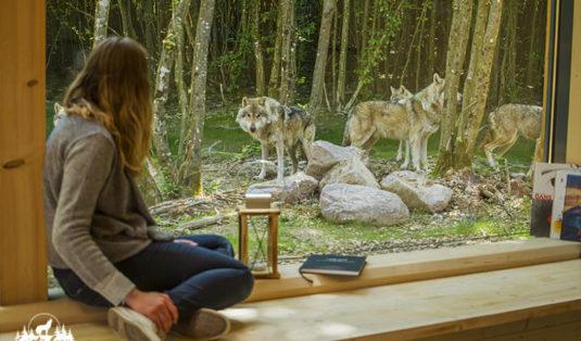 slapen met wolven