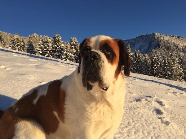 Hond Loebas van Hotel Esprit Montagne