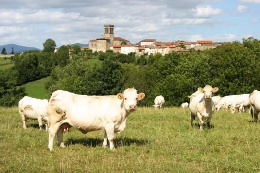 B&B in de Auvergne Paresse en douce