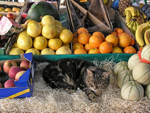 slapende kat op Franse markt