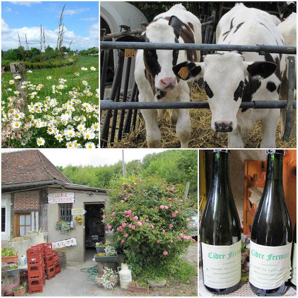 Cider productie in Pays d'Auge