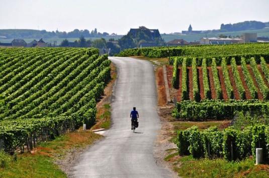 fietsen door de wijngarden