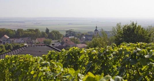 Verzy fietsen wijngaarden Champagne-Ar