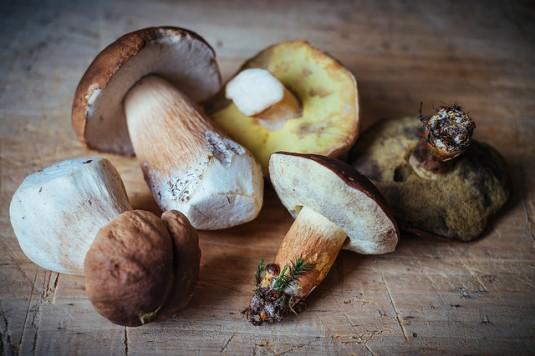 paddestoelen recepten eekhoorntjesbrood
