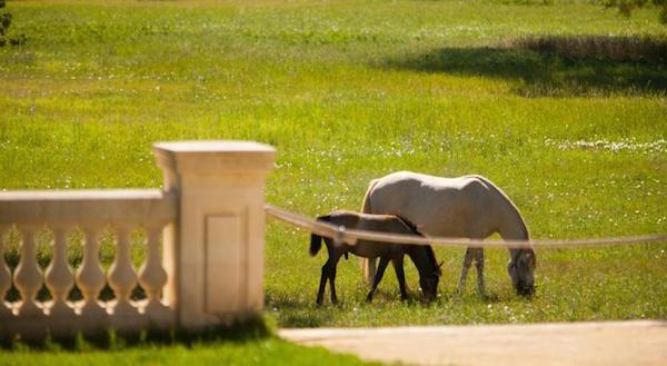 Manege met paarden