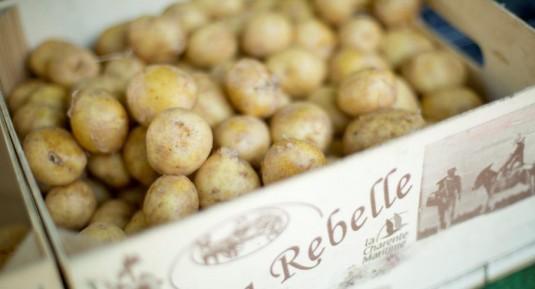nieuwe aardappelen Ile de Re Charente Maritime