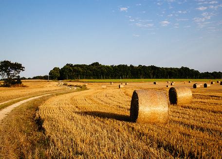 Charente platteland