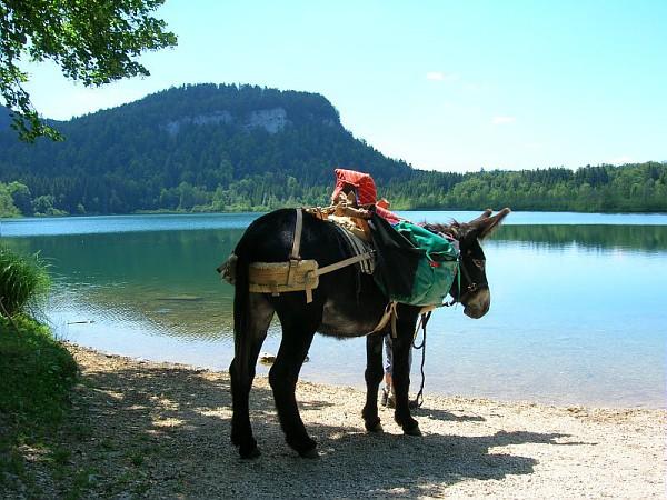ezel wandelen Jura Grand Huit Franche-Comté ezeltochten Lac Etival