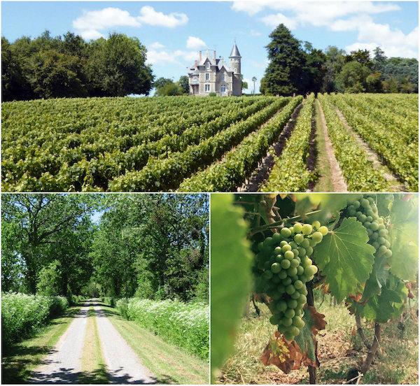 wijngaard bij Chateau Bedruriere vendee