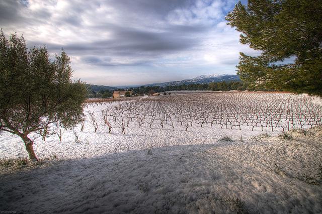 provence-sneeuw-wijngaarden-feb-2012-cc-marcovdz