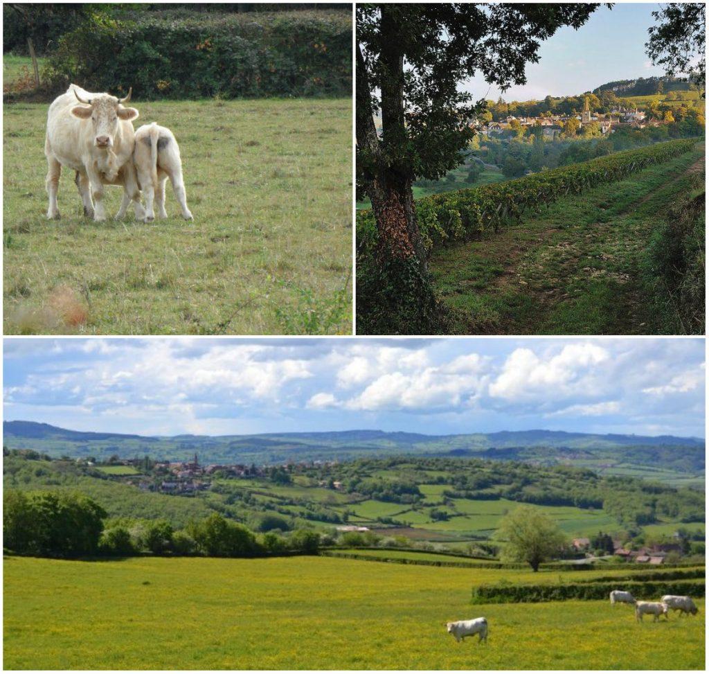 Bourgogne landschappen Charolais, Cluny Macon Cote d Ord