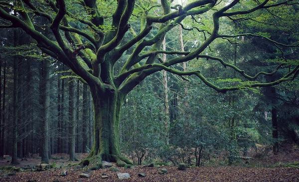 Het middeleeuwse bos van Brocéliande