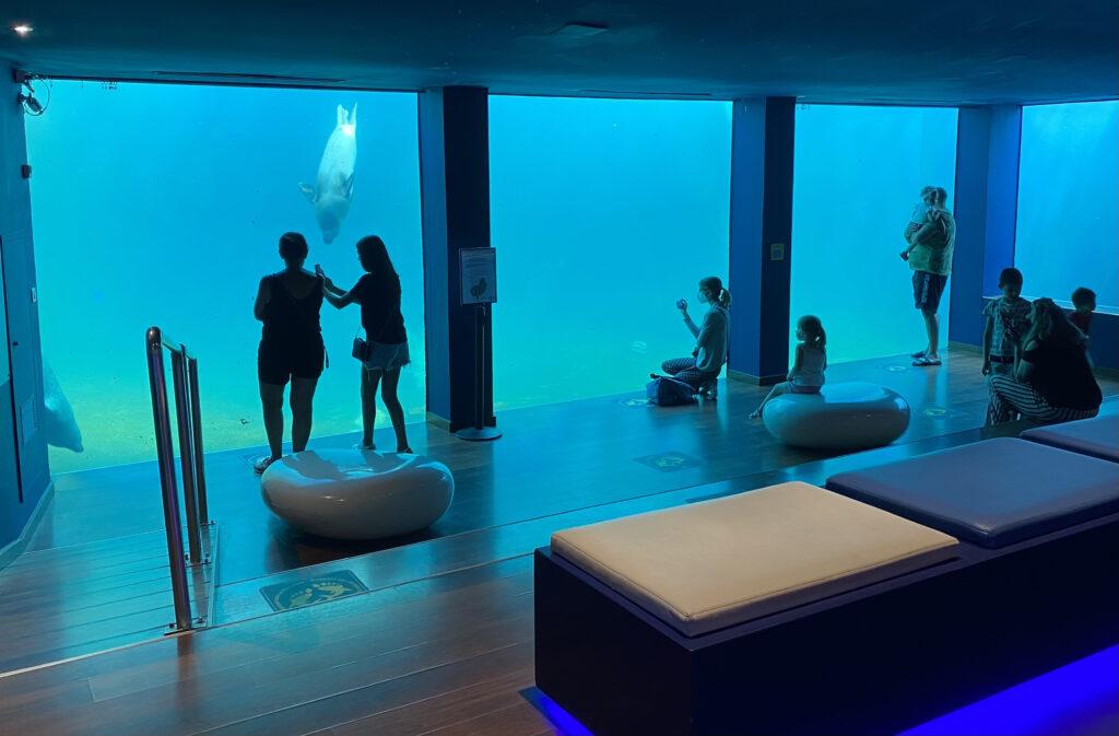 Grau du Roi Sea aquarium