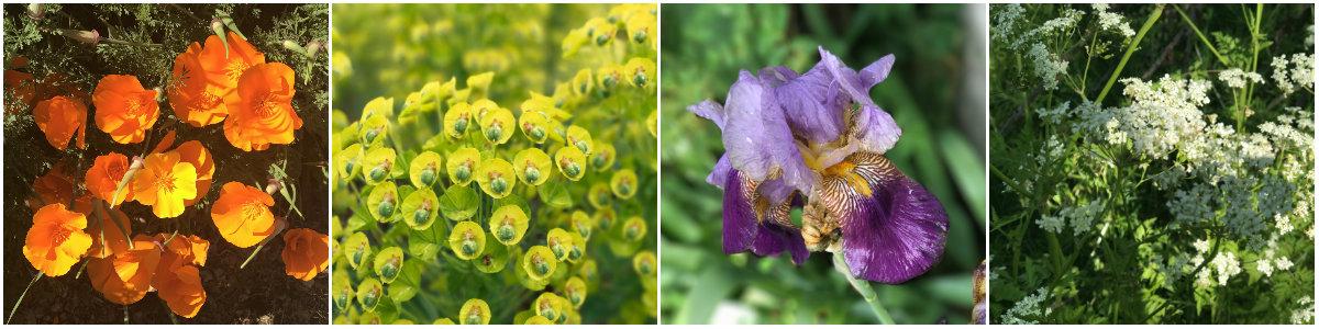 VeloFrancette-voorjaar
