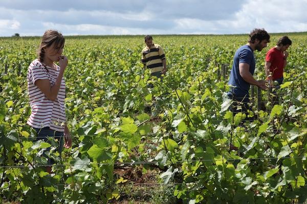 Franse film Retour en Bourgogne