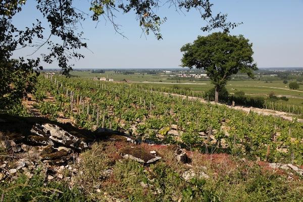 Landschap van de Bourgogne