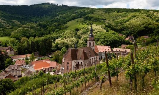 Elzas wijndorpen herfst