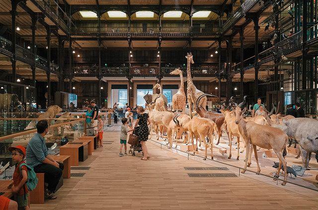Jardin des Plantes Galerie de l Evolution