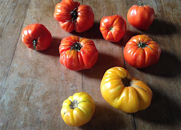 Lot-et-Garonne vakantiestreek tomaat Marmande