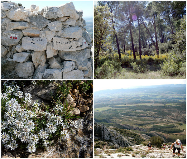 Bossen rond de Berg Sainte-Victoire in de Provence
