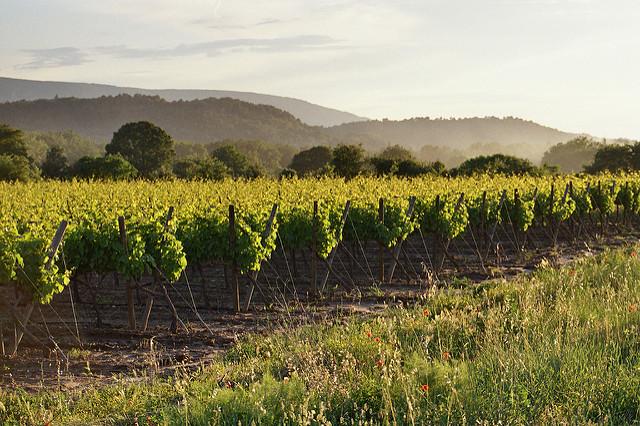 Het mooiste van de Luberon Provence wijngaard