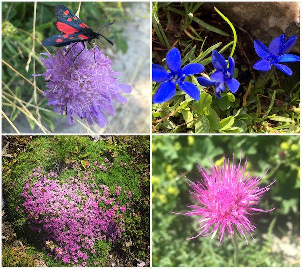 Bloemen en natuur tijdens Carole's wandelvakantie in de Queyras