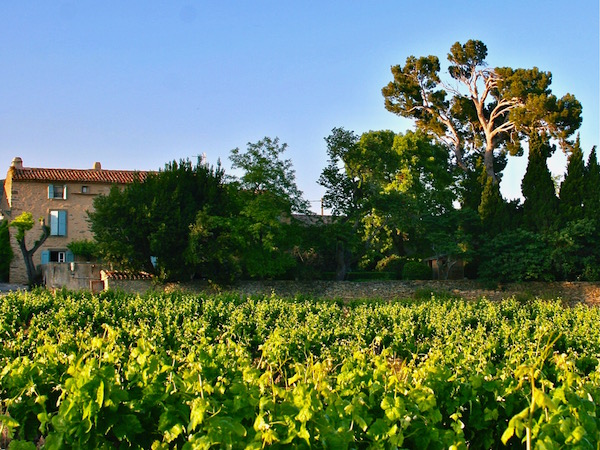 wijngaarden van de Minervois rond Siran