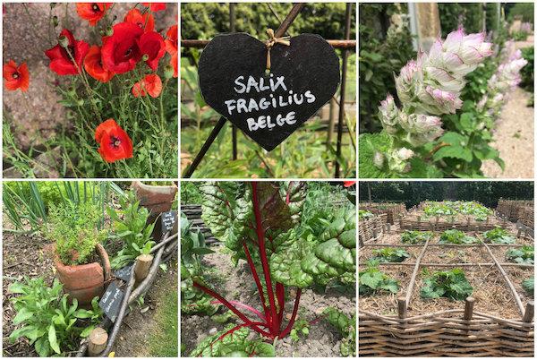 Diversiteit aan bloemen, planten en groentes