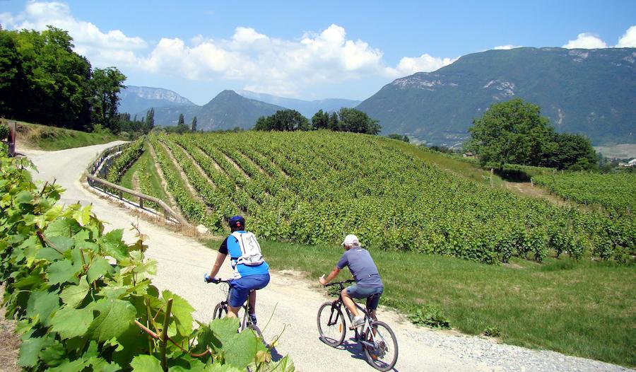 Wijngaarden van Saint André