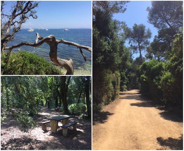 natuur op eiland Sainte Marguerite