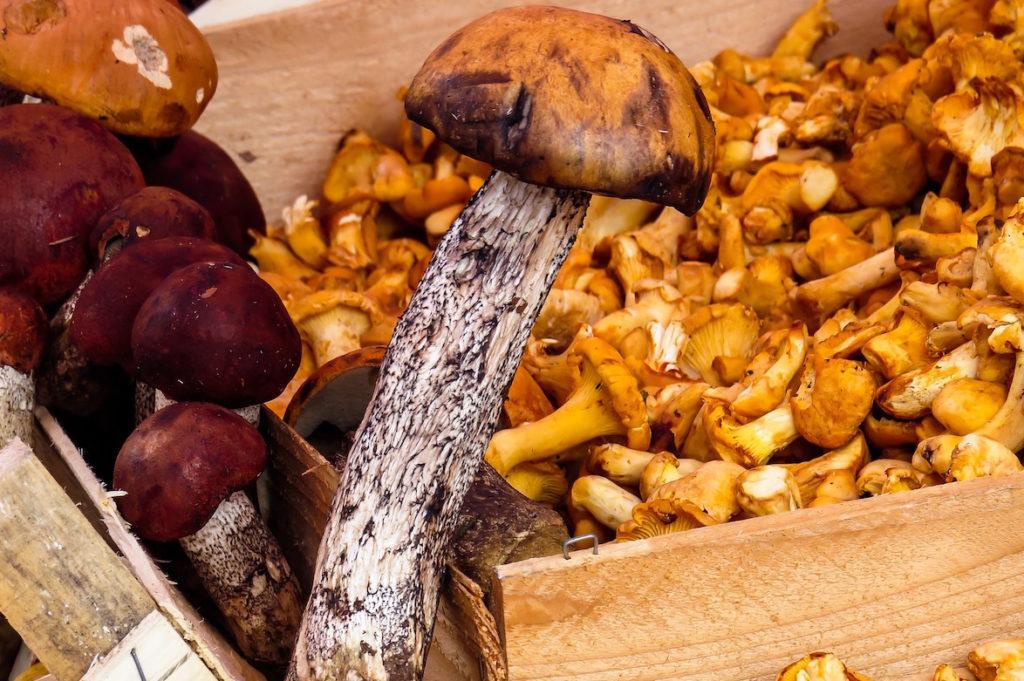 catharellen seizoensproducten herfst Franse markt