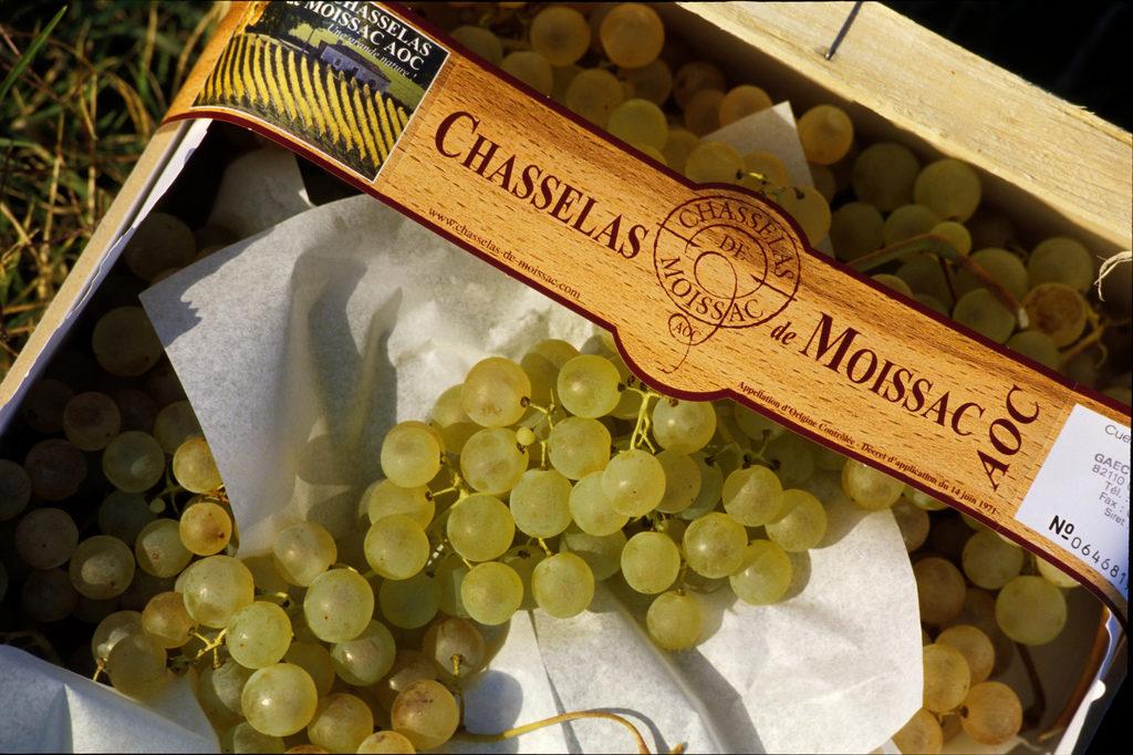 chasselas-druiven seizoensproducten herfst Franse markt