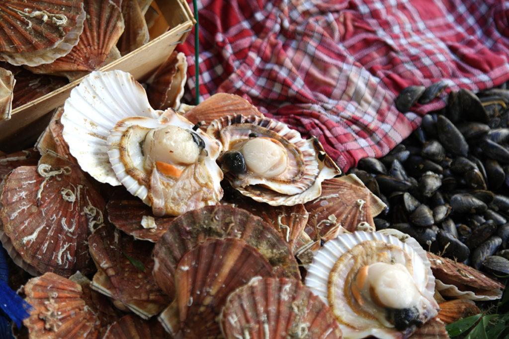 coquilles seizoensproducten herfst Franse markt