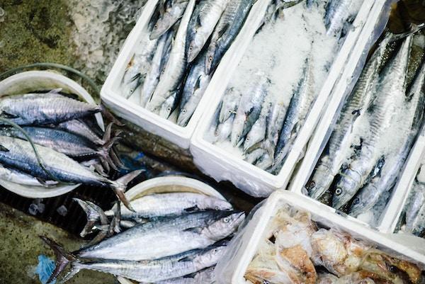 vis vangst Bretagne makreel