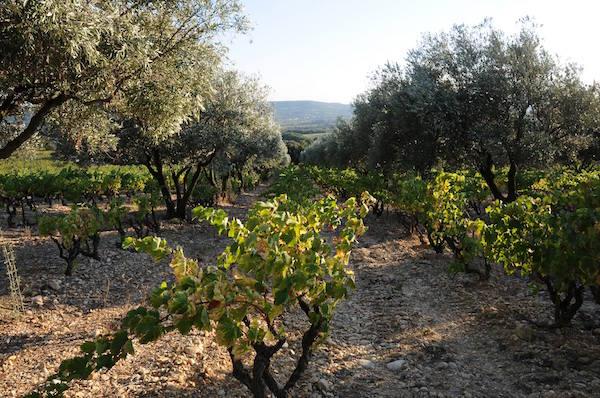 fab fransen wijnboer in Zuid-Frankrijk