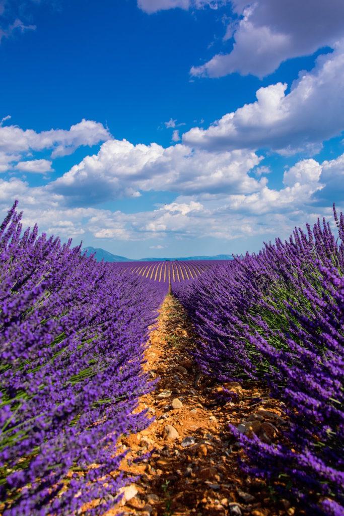 Provence Valensole lavendel