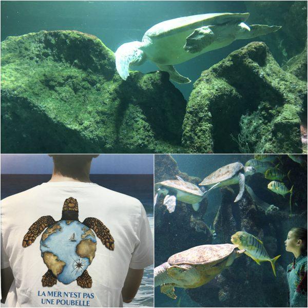 Aquarium van La Rochelle schildpadden