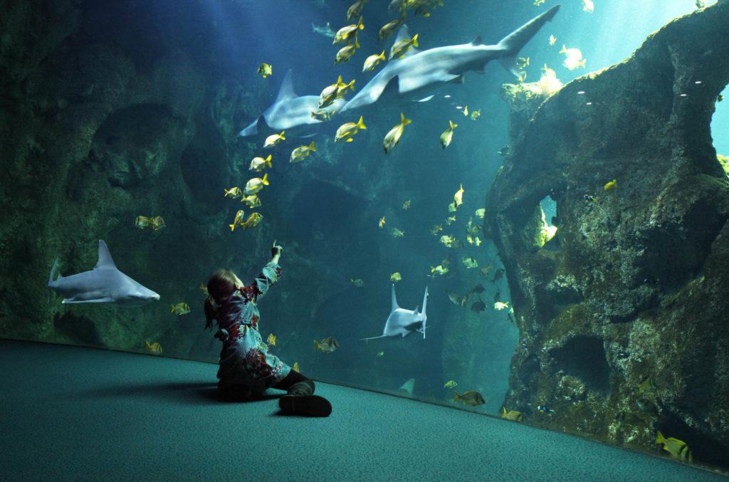 Aquarium van La Rochelle haaien