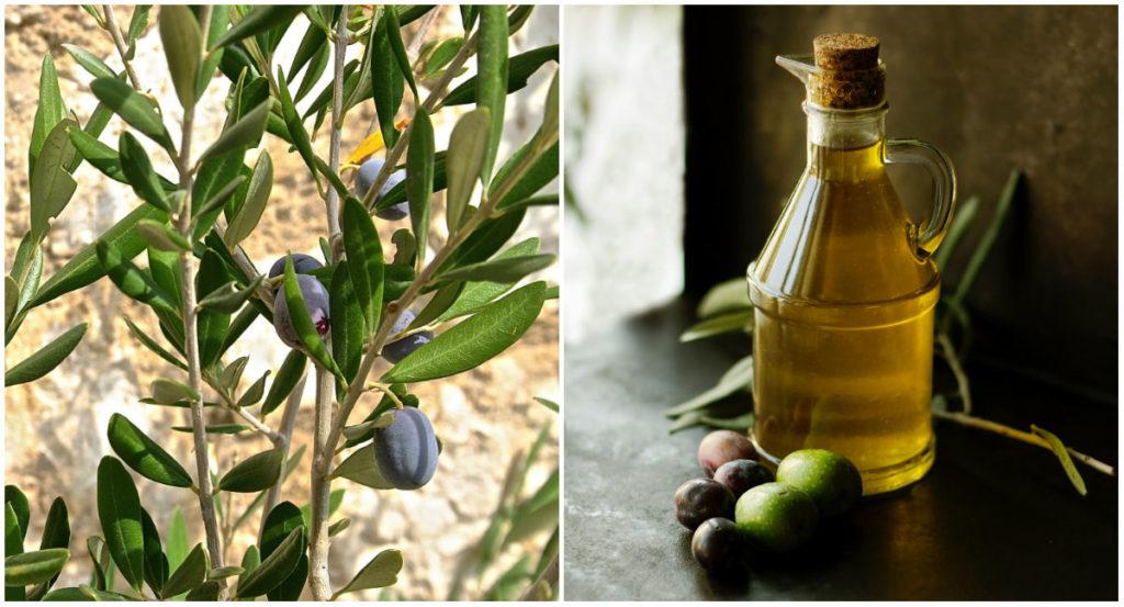 olijfolie voor de huid