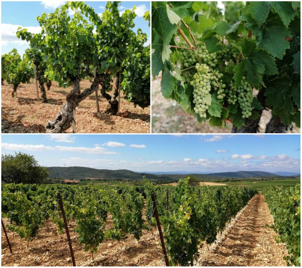 wijngaard-languedoc-ashja-van-den-akker