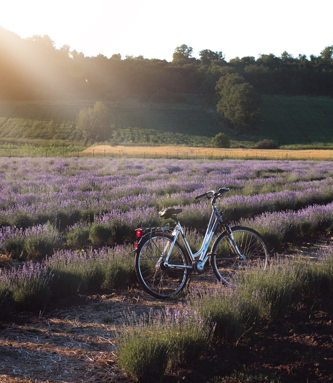 Provence fiets