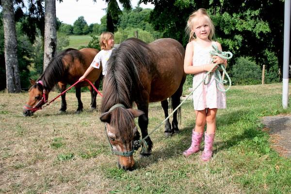 Vakantiedomein wandelen met de pony's